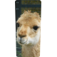 Container kliko - Alpaca stickers
