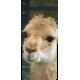 Container kliko - Alpaca stickers