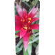 Container kliko - Guzmania stickers