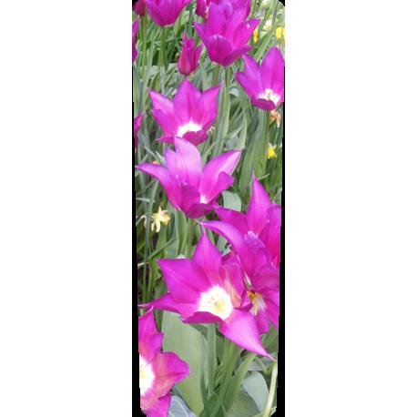 Container kliko - Paarse bloemen stickers