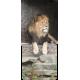 Container kliko - Leeuw stickers