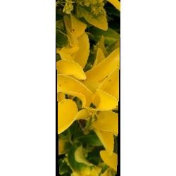 Container kliko - Gele struik stickers